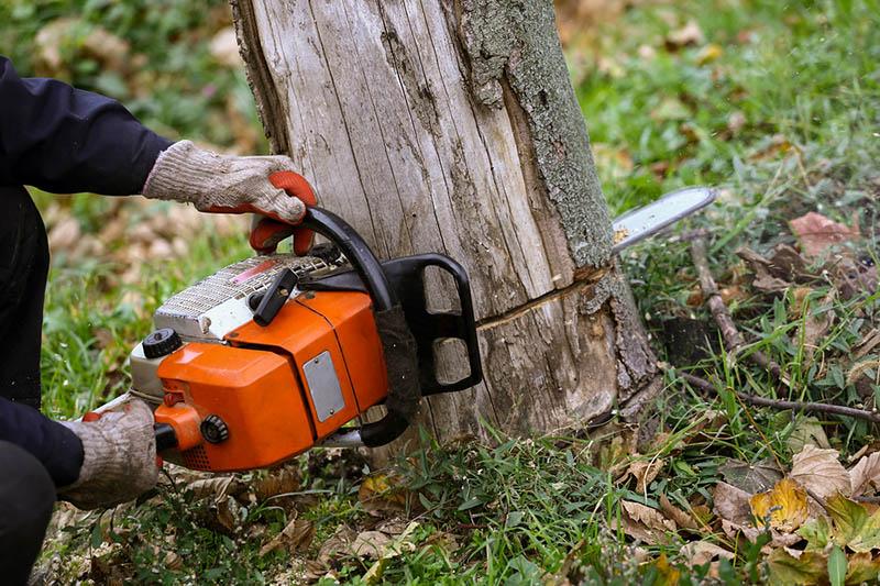 Natura Tree Services