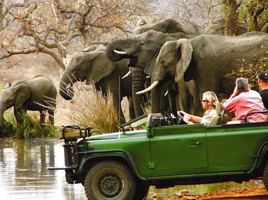 Kruger Park Safari Book Your Kruger Tour Now, Budget and Luxury Accommodation