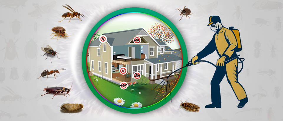 Wasp Control & Nest Removal Melbourne | Wasp Treatment