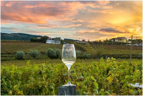 Alexander Valley Wine Tasting