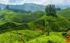 Let Kerala Introduce You to Nature's Unrivalled Beauty