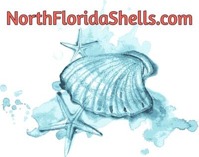 North Florida Shells