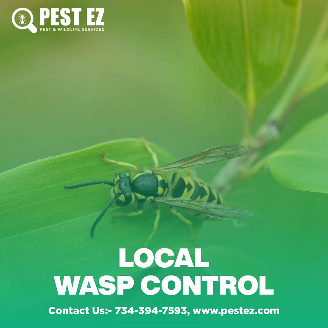when to control paper wasp nest ?