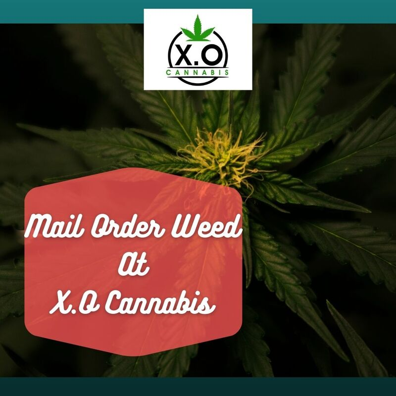 Mail Order Marijuana Dispensary - X.O Cannabis