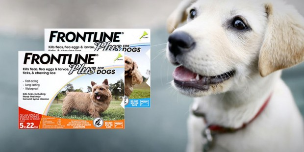 Buy Frontline Plus Flea & Tick Control for Dogs - Now 20% Off on All Products