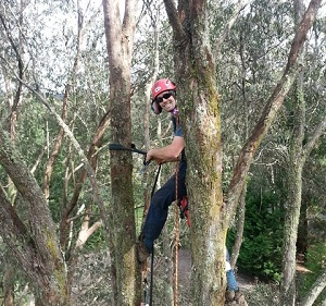 Affordable Tree Trimming in Gisborne