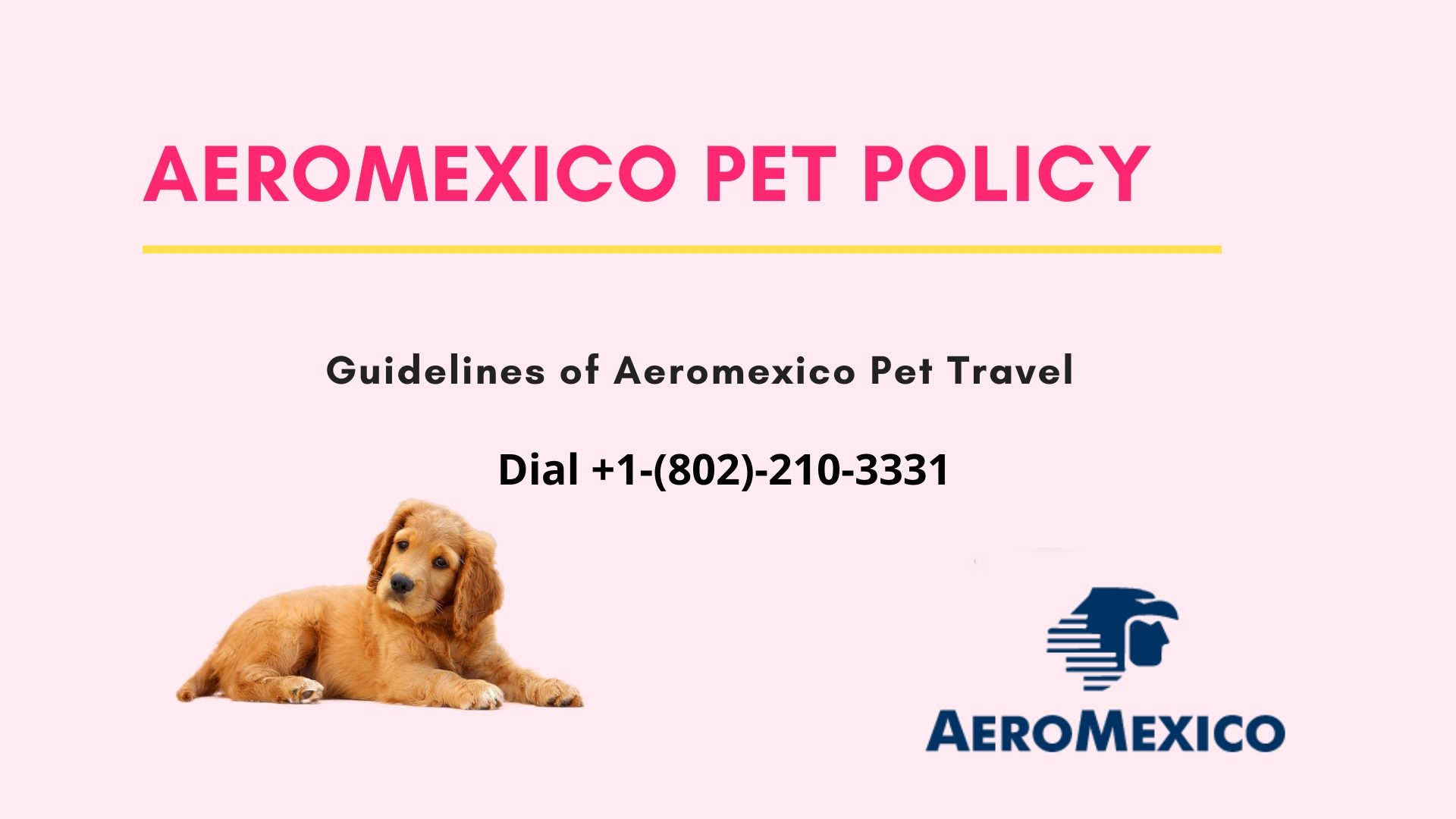 Aeromexico Pet policy and travel +1-(802)-210-3331