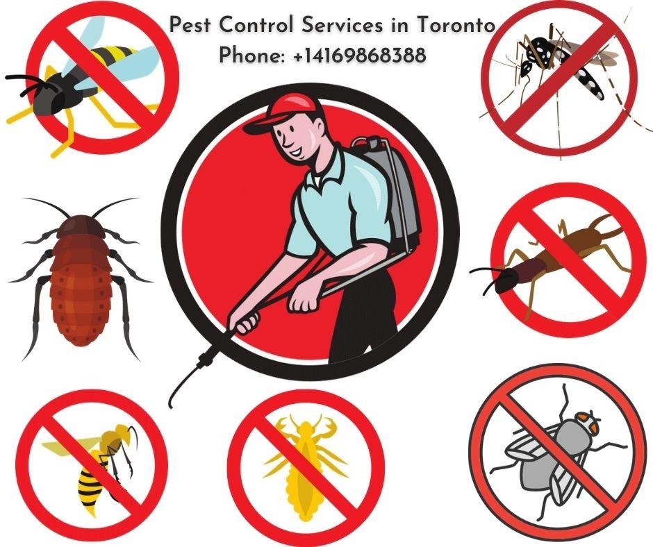 Best Pest Control Company in Toronto