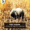 Assam Travelling Place: What To Visit? Logo