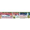 Christmas Tree Sales Icon