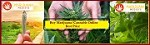 Marijuana Medisys Icon
