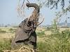 Jewel Safaris Limited