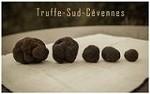 Truffe-sud-cevennes Icon