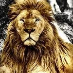 Lion Canvas Art Icon
