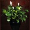 Park Avenue Floratique Icon
