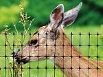 Deer Fence USA Icon