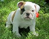 Outstanding Bully Family Icon