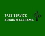 Tree Service Auburn Alabama Icon