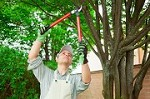 William Tree Service in Katy Icon