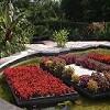APCO Garden Design Icon
