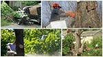 Affordable and Reliable Tree Service Ocala