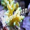 loveforfish Icon
