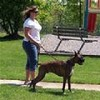 Aunt Darlenes Pet Sitting & Dog Walking Service, LLC Icon