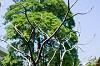 Richmond Tree Services Icon