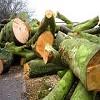 Glasgow Tree Services Icon