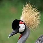 Virtuoso African Safaris Icon