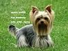 Austin Mobile Dog Groomers Icon