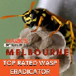 Wasp Removal Melbourne Icon