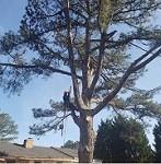 Vilchis Tree Service Icon