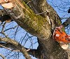 United Tree Pro