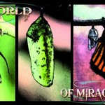 A World of Miracles