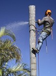 Just Do It Tree Care (New Port Richey) Icon