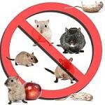 Ann Arbor Pest Control Icon