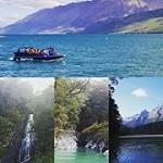 EVERYTHING NEW ZEALAND Icon