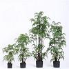 Sharetrade Artificial Plant and Tree Co., Ltd Icon