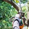 Tree Felling Pretoria Icon