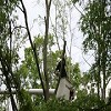 Certified Arborist Alpharetta Icon