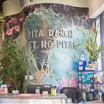 Rita Ranch Pet Hospital Icon