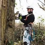 Tree Service STree Service Stamfordtamford Icon