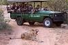 Viva Safaris Icon