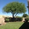 Arizona Tree Trimming & Removal Icon