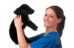 Andreas Mobile Pet Grooming Icon