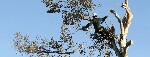 Pro Cut Tree Removal Melbourne Icon