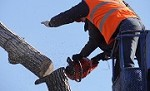 Tree Services of Chino Hills Icon