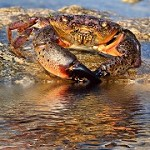 Stone Crab Seafood, LLC Icon