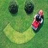 Lawn, Turf, Turf Gold Coast, New Lawn Icon